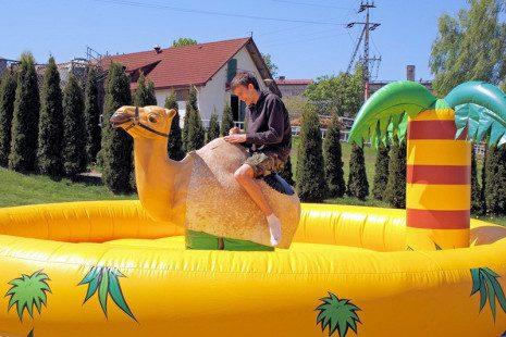 dla-doroslych-wielblad-rodeo-03